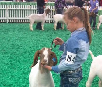 Image Mittag Sisters Show Goats